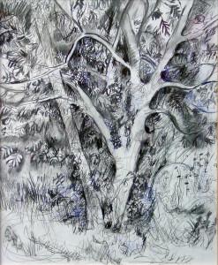 Ash Tree - 2007 - Pen, mixed media on Paper - 40 X 50 cm
