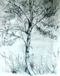 White Poplar - 2007 - Pen, mixed media on Paper - 40 X 50 cm